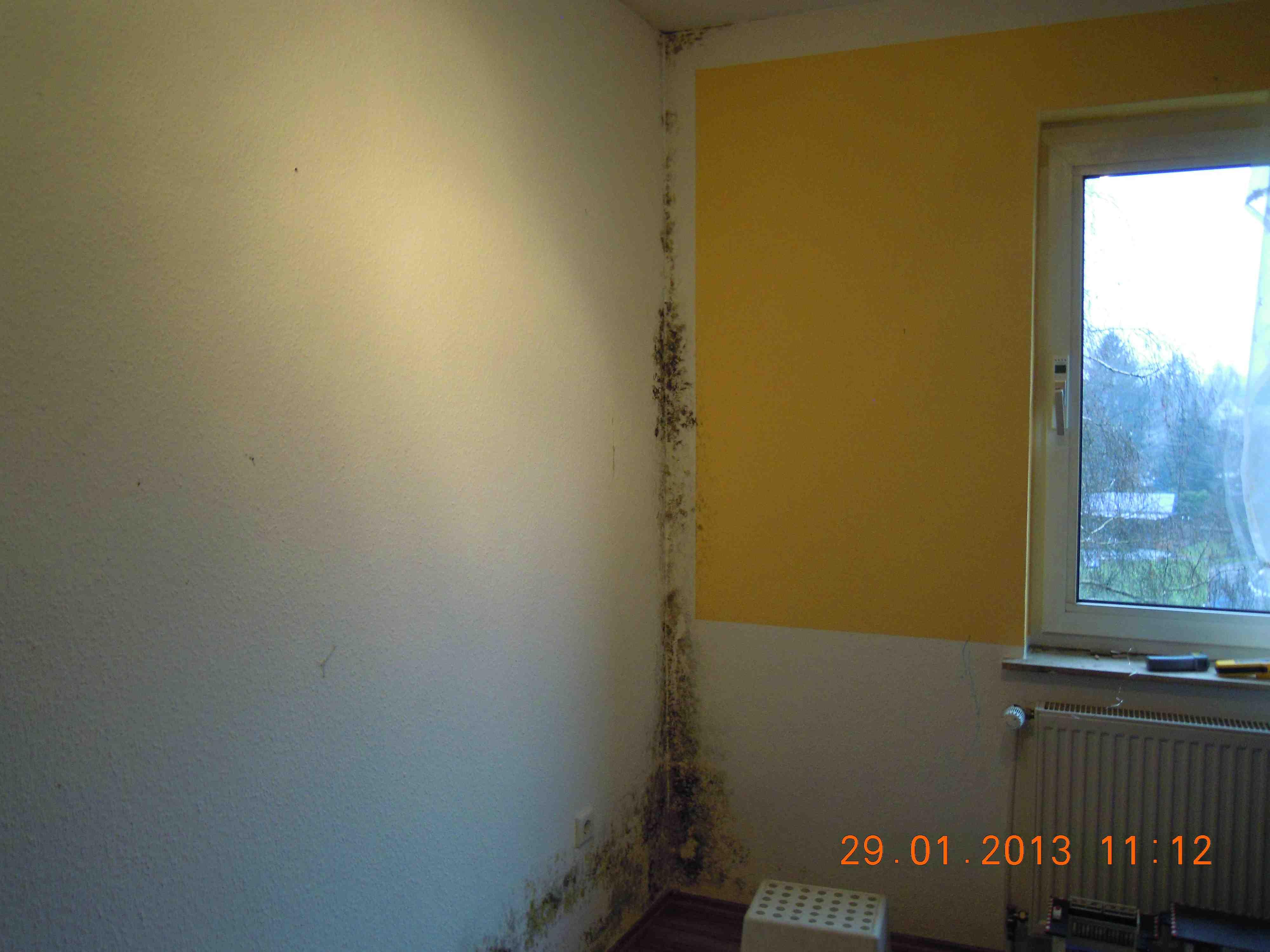 likwidacja pleśni na ścianie w mieszkaniu