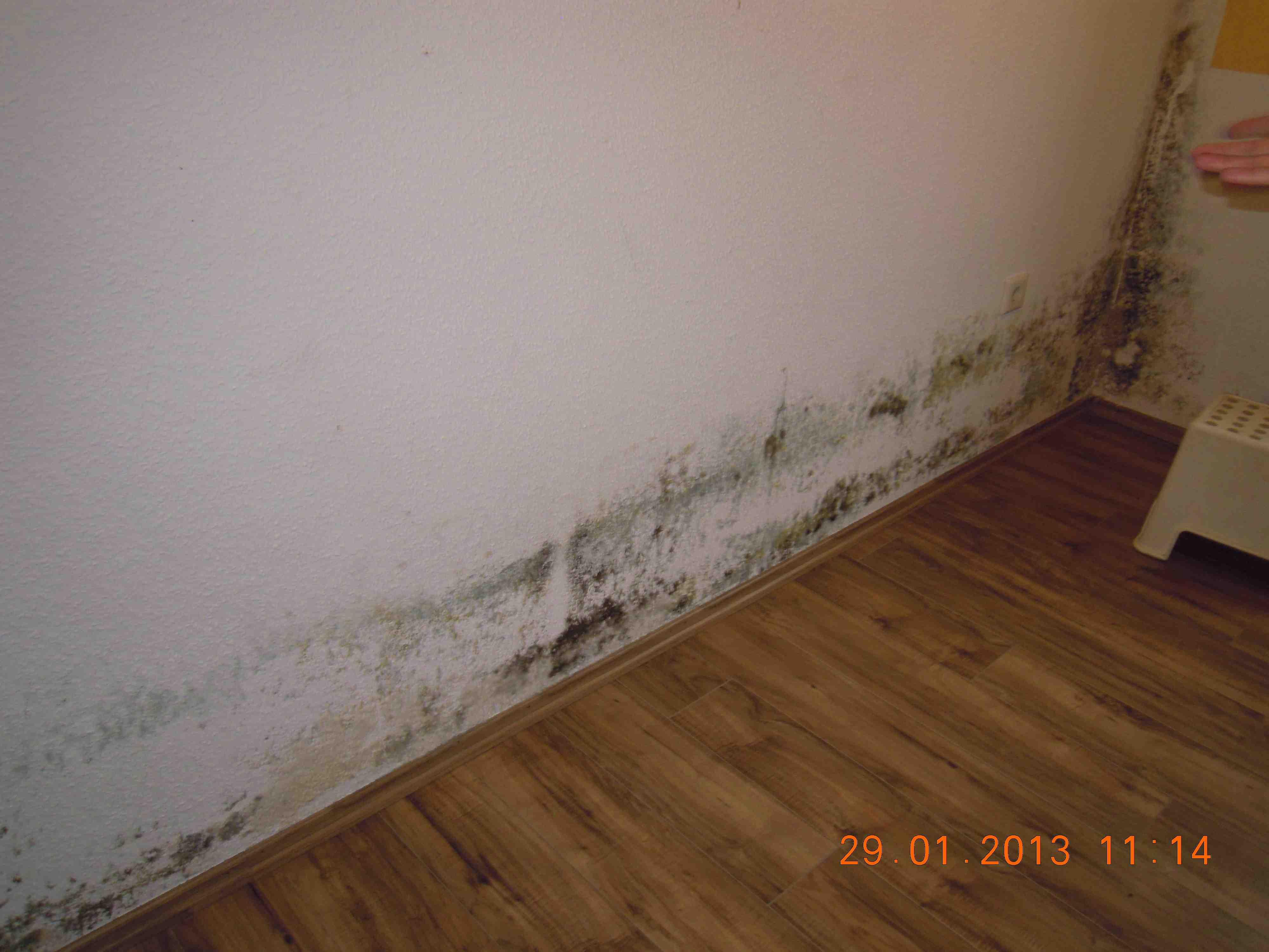 likwidacja pleśni na ścianie w domu