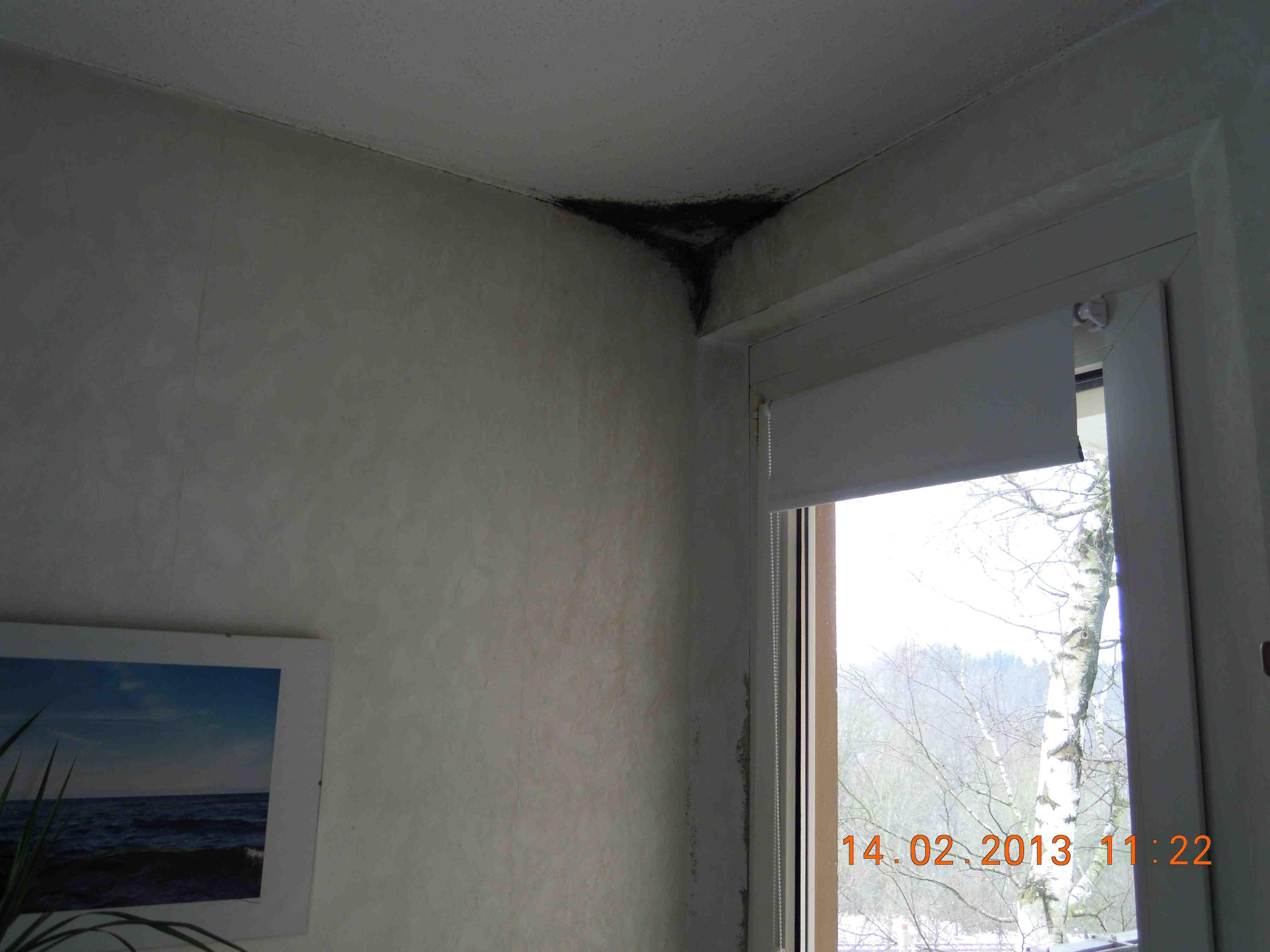 likwidacja grzyba z sufitu