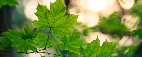 Sprzedaż ekologicznych środków do usuwania grzybów i pleśni